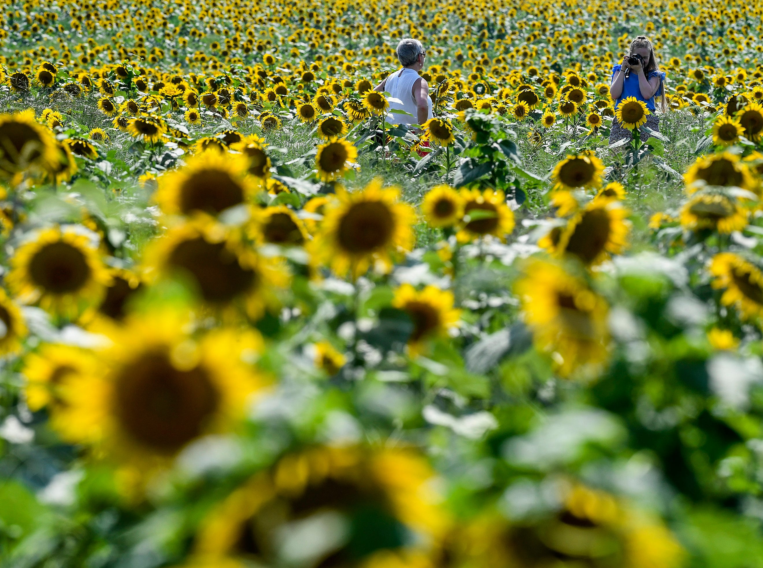 Angie and Lily Gulledge, of Eclectic, take photos as the sunflowers bloom in the Sheridan family sunflower field about five miles west of Autaugaville, Ala. on Monday August 13, 2018.