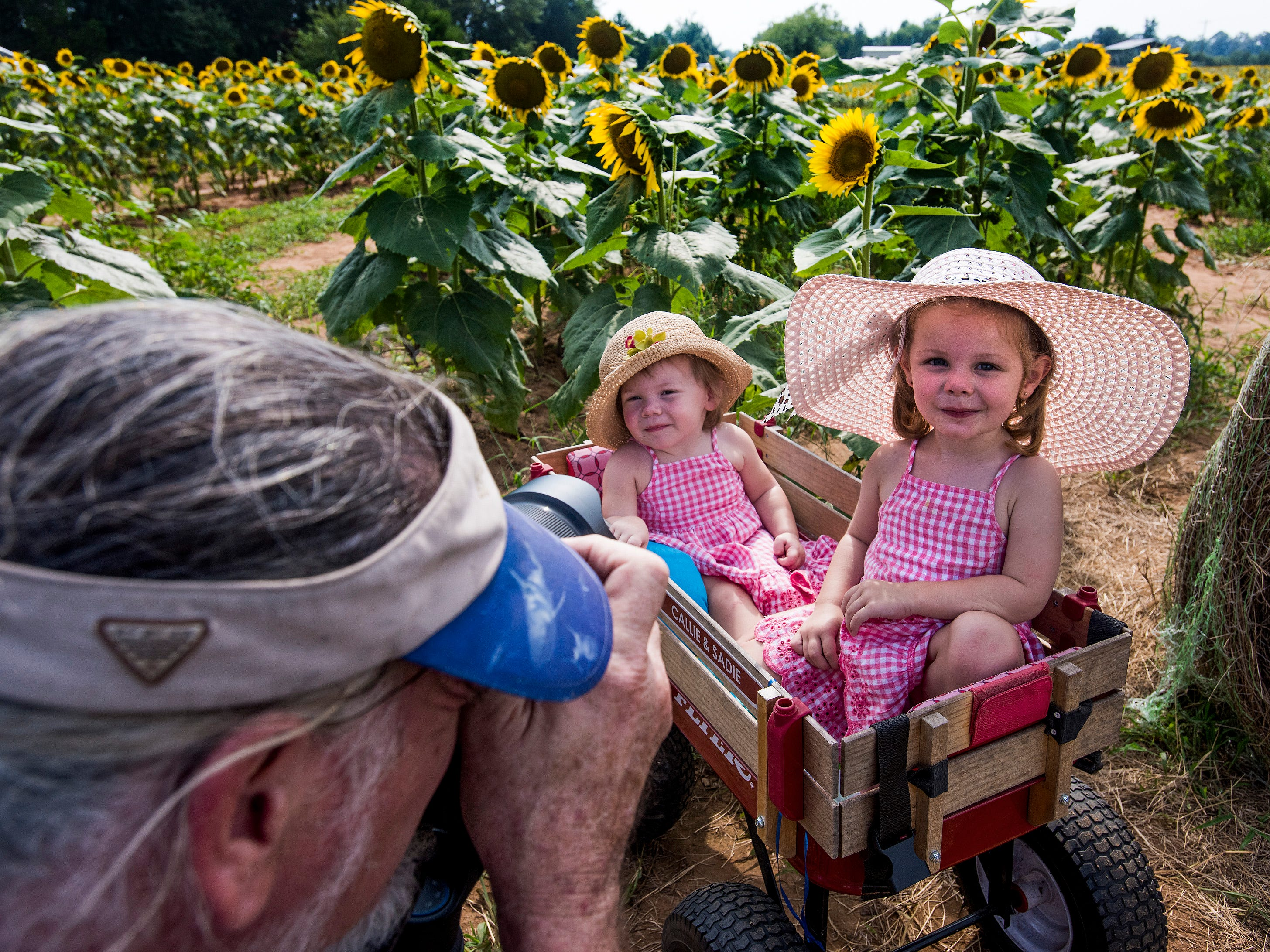 Sadie Young, left, and Callie Young pose for photos with their grandfather Mike Young in the Sheridan family sunflower field about five miles west of Autaugaville, Ala. on Monday August 13, 2018.