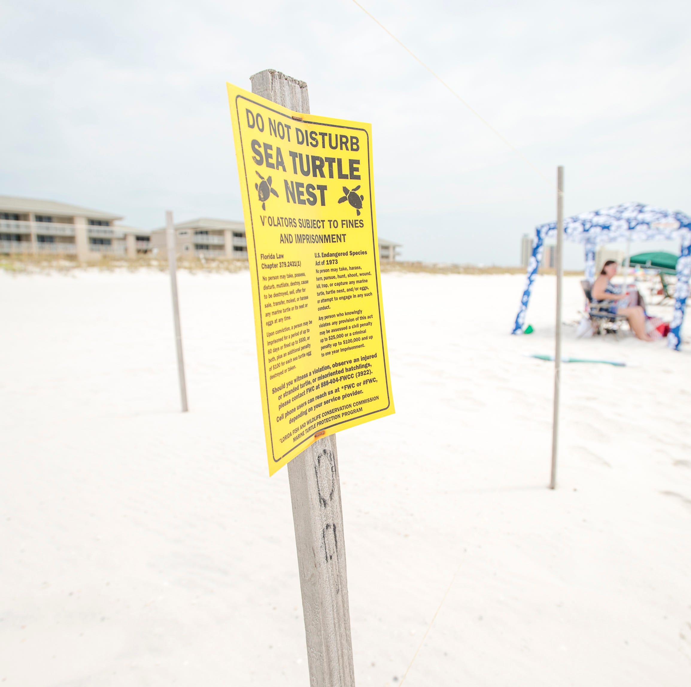 A sea turtle nest behind the Gulf Winds Condominiums in Pensacola on Monday, August 13, 2018.
