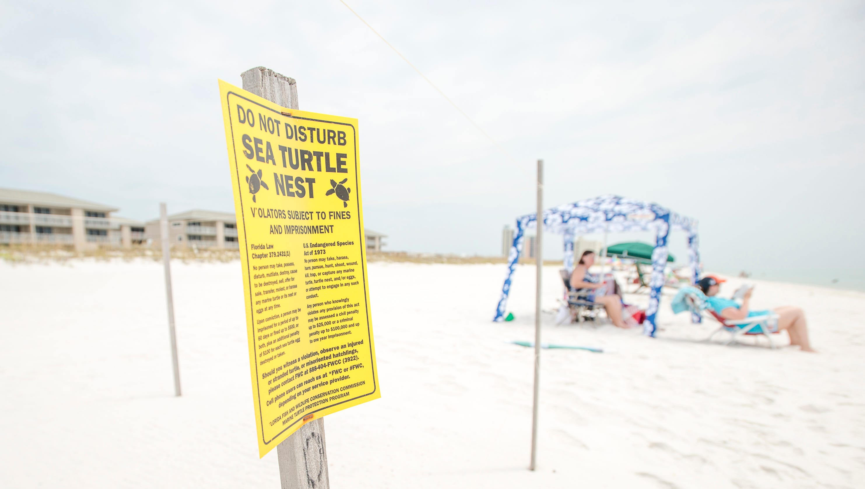 Sea turtle nest monitoring changes makes lights even more important