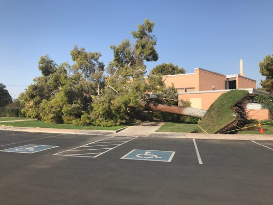Fallen tree after monsoon storm, Aug. 13, 2018