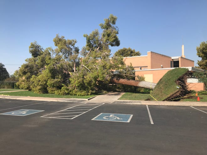 A large tree fell at the Tempe Arizona Stake of the Church of Jesus Christ of Latter-Day Saints at College and Alameda avenues, as taken on Aug. 13, 2018. The tree fell clear of the building, and no injuries were reported.