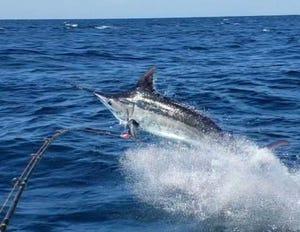 The Shut Up & Fish Guam Marlin & Tuna Fishing Tournament will be held 6 a.m. to 6 p.m. June 15.