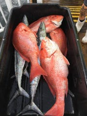 Red snapper up to 17 pounds filled the fish wagon Saturday aboard Last Mango charters out of Fort Pierce City Marina. Anglers will have one more weekend to catch and keep a red snapper.
