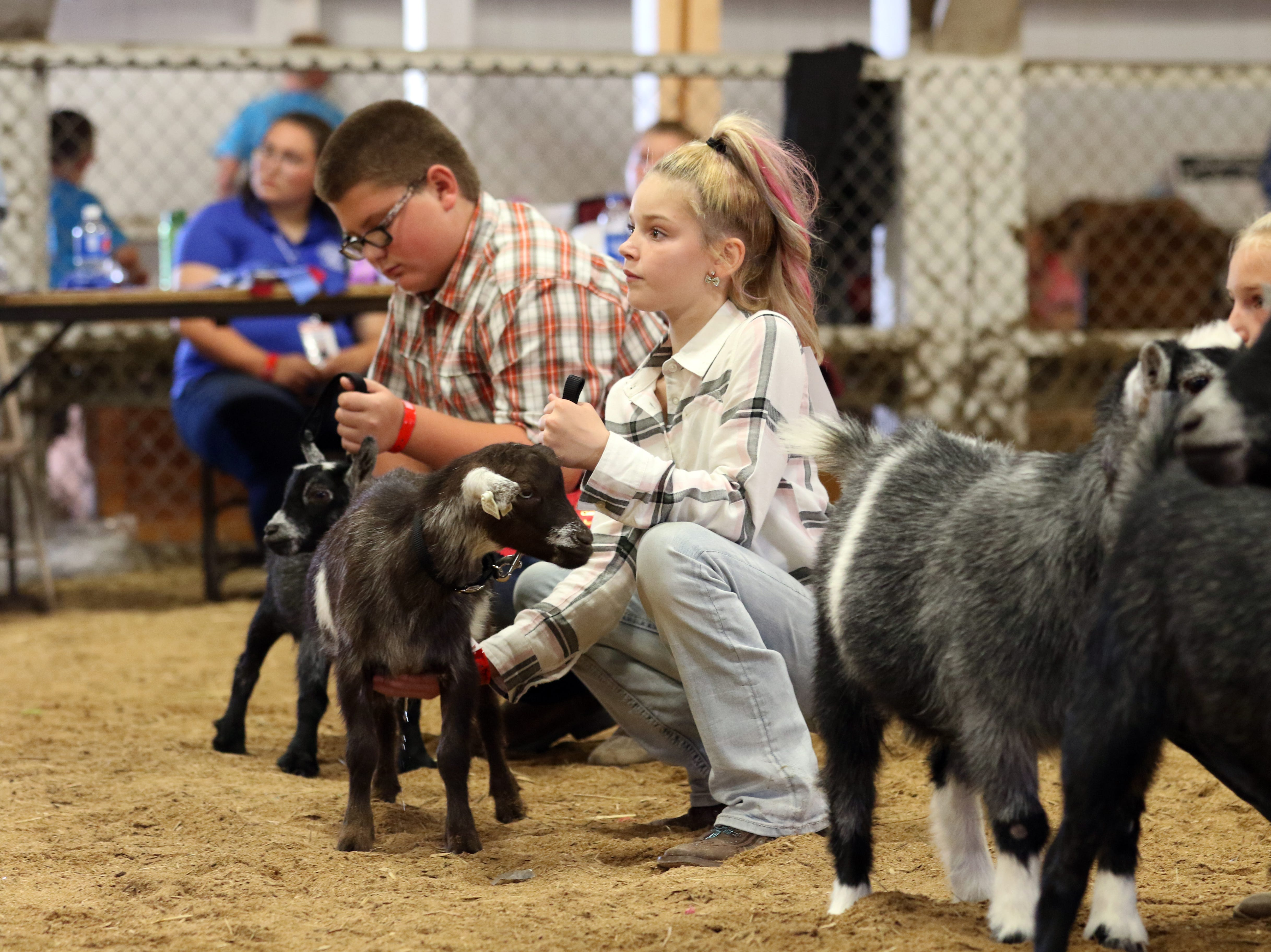 Youngsters show goats during Junior Fair goat judging at the Muskingum County Fair on Monday.
