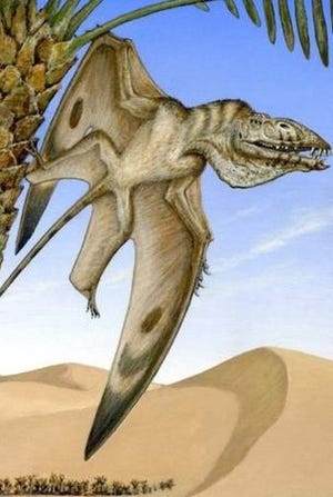 An artist's impression of a newly discovered species of pterodactyl, as it flew above the Utah desert about 200 million years ago.