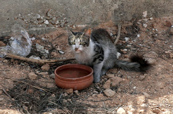 File picture - A cat with burns tries to drink water outside a fire damaged house in Rafina, Attica, Greece, 26 July 2018, following a deadly forest fire.