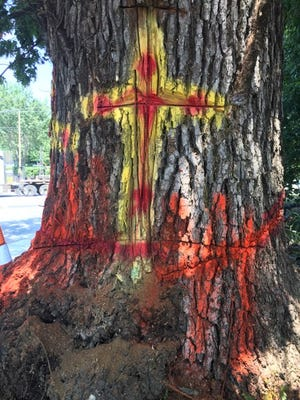 Symbols were painted onto the tree at the front corner of the property on the northeast corner of Mills Gap and Sweeten Creek roads. The tree was removed Aug. 13, 2018.