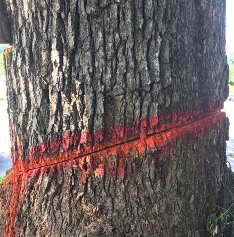 Vandalized tree removal closes major South Asheville intersection