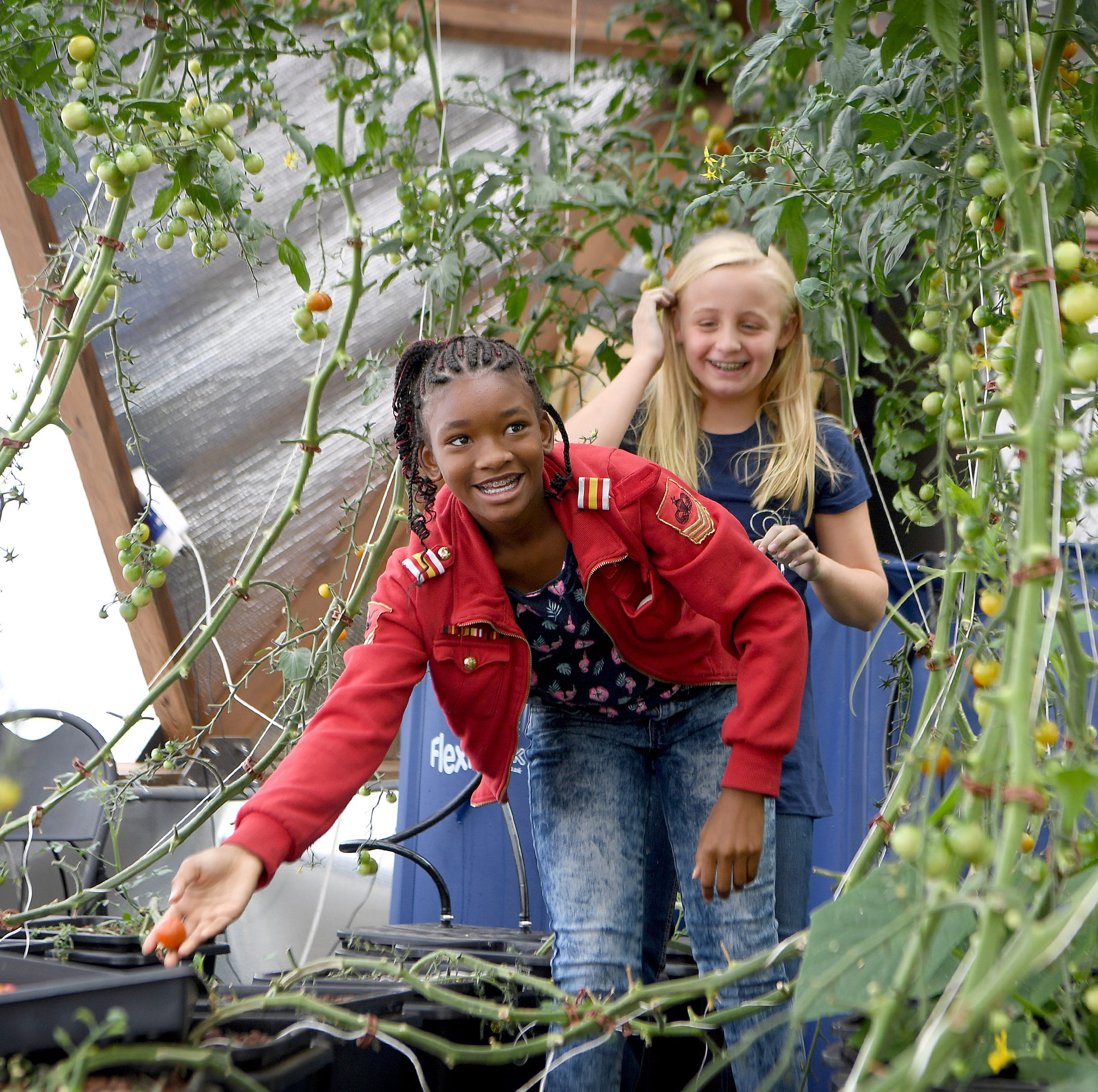 Jameriyah Collins, 11, left, and Kyndal Devlin, 10, pick cherry tomatoes in the Eliada Farms' geodesic grow dome on Thursday, Aug. 9, 2018. The food grown in the dome is served to children in the Eliada cafeteria.