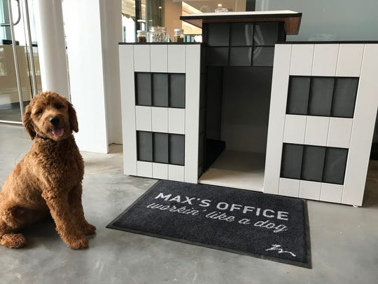 Max, a goldendoodle, poses outside his dog house at Holmes Murphy in Waukee. The insurance company purchased the dog to boost office morale.