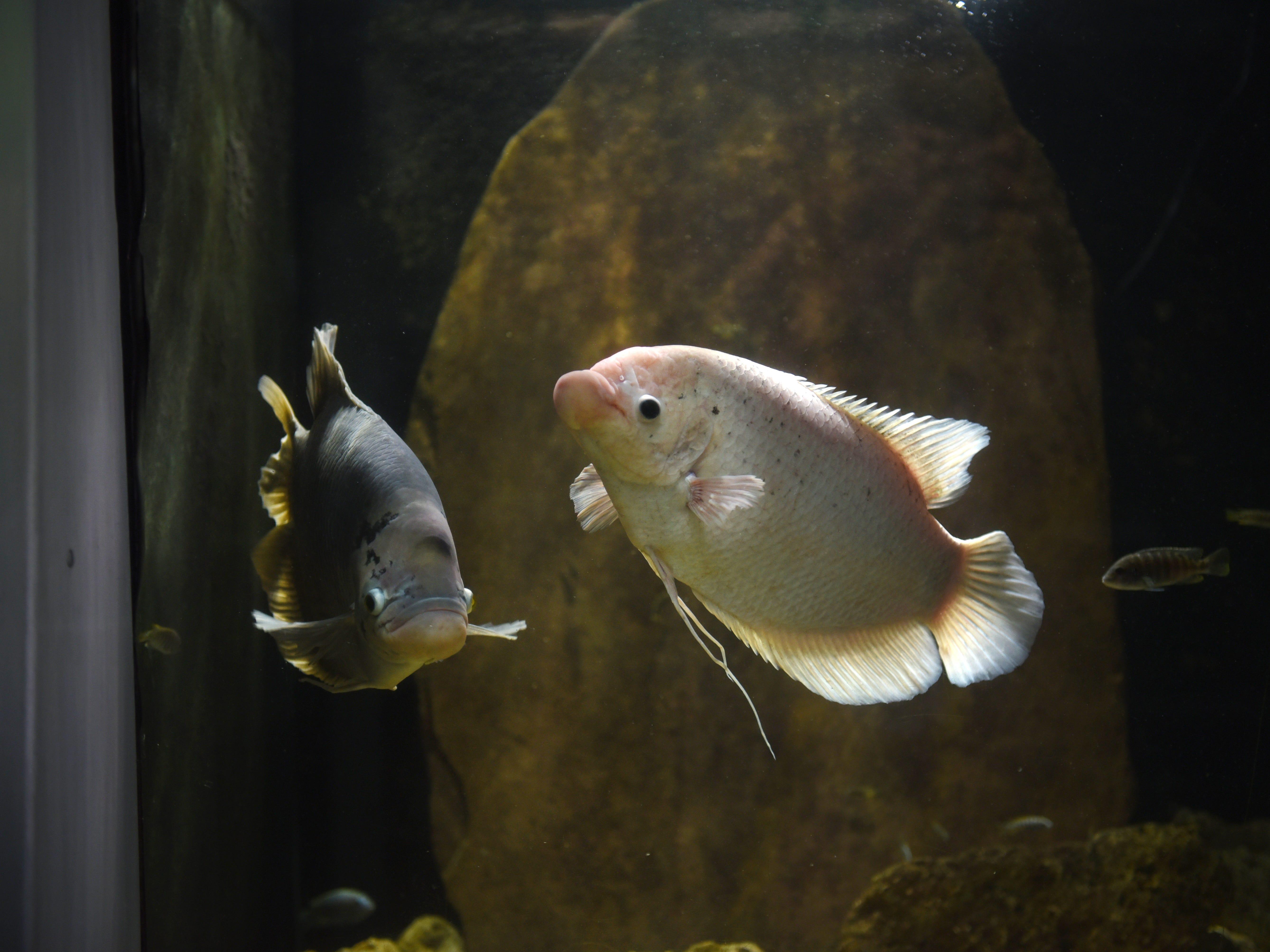Belle Isle Aquarium fills more tanks, plans more improvements