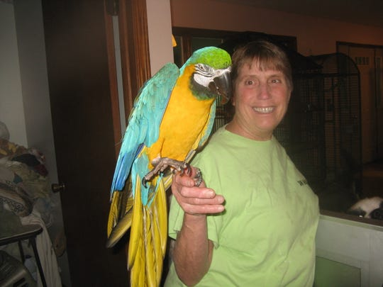 Dr. Laurie Hirt  holds her 27-year-old macaw, Rico, a resident of Another Chance Sanctuary.