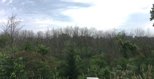 Emerald Ash Borer Ozauke County