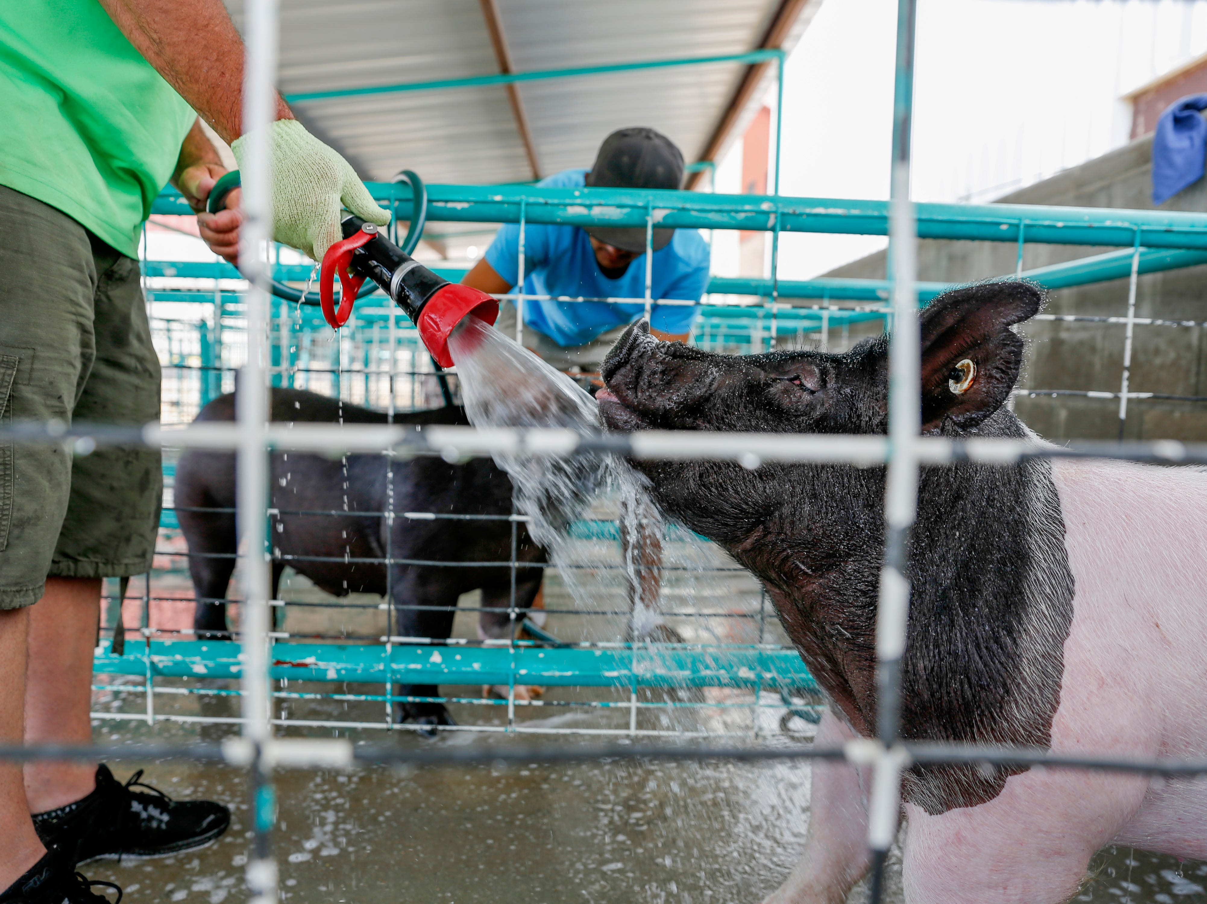 Jake Ridley, left, and Ty Velasqquez wash their pigs, Tuesday, Aug. 14, 2018 at the San Juan County Fair at McGee Park in Farmington.