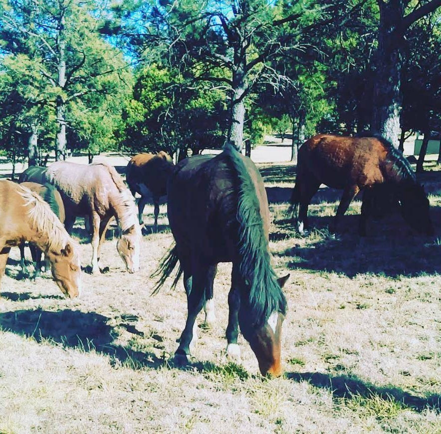 Advocates for free-roaming horse herds north of Ruidoso grow impatient with court and fear one herd is missing