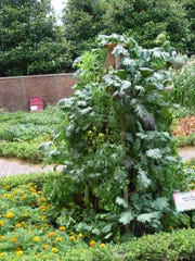 Wooden planting towers are sown with a wide variety of winter greens and Asian vegetable for a spatially efficient method.