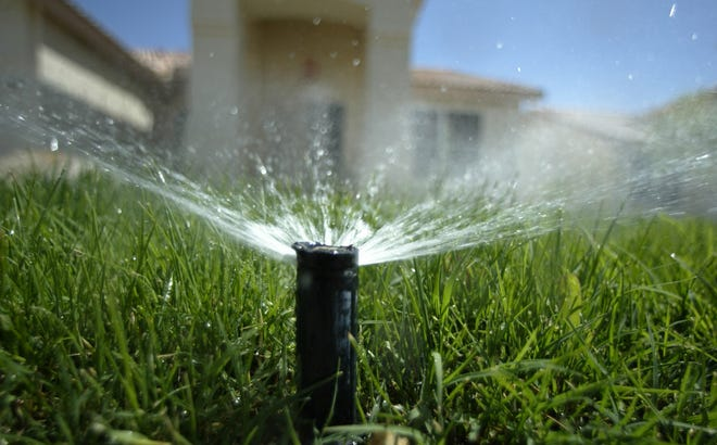 A sprinkler head pops up from the ground to water a lawn.