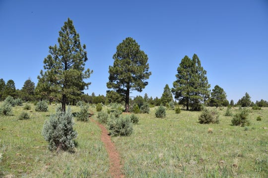 A sunny section of the circumference loop of the Land of the Pioneers Trail.