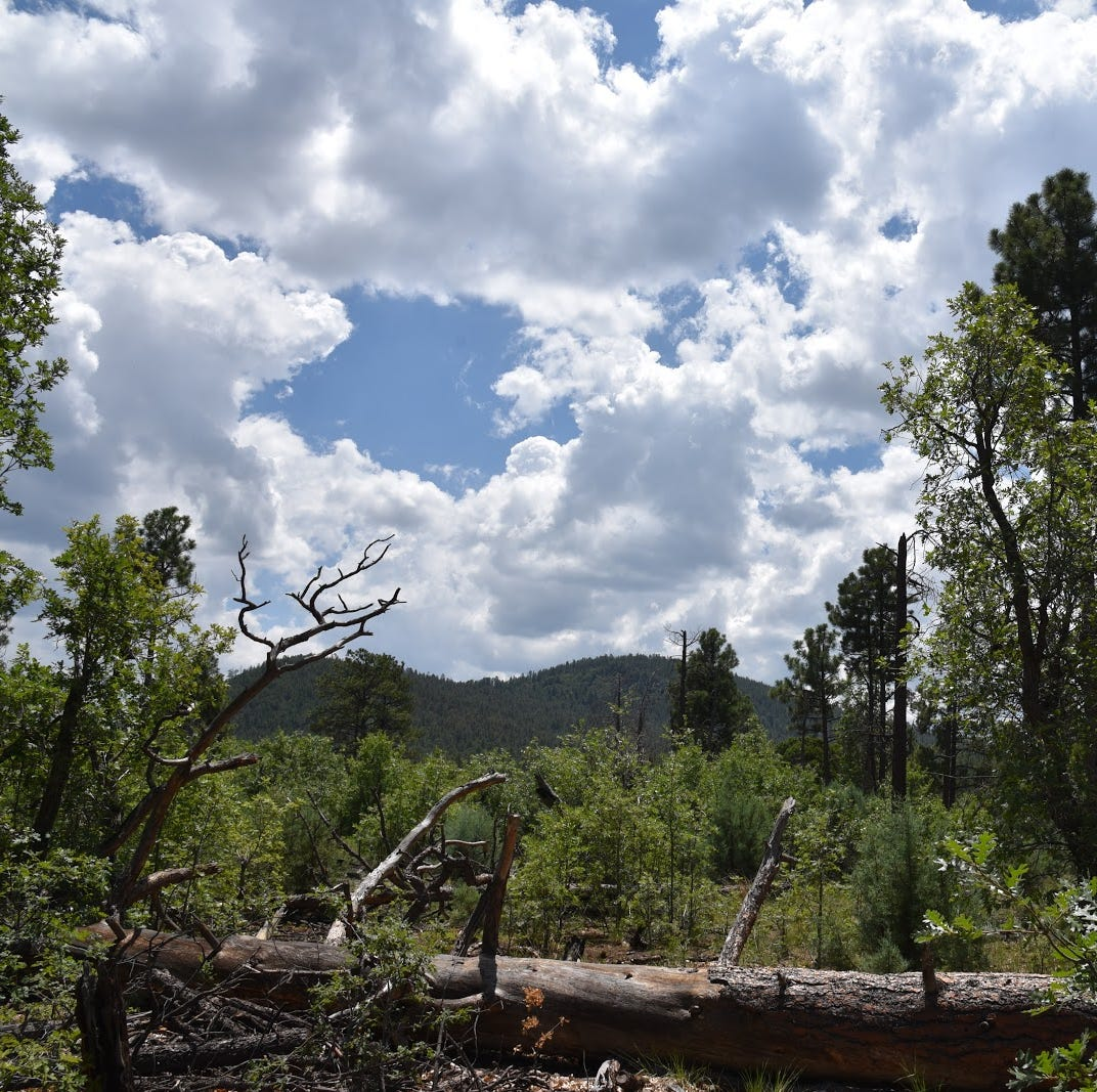 This woodsy Arizona hike reveals a sinister backstory