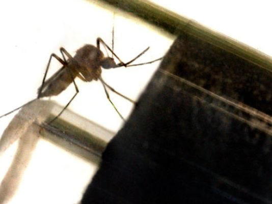 The local Penn State Extension Office will spray for adult mosquitoes on Wednesday in Manchester Township.