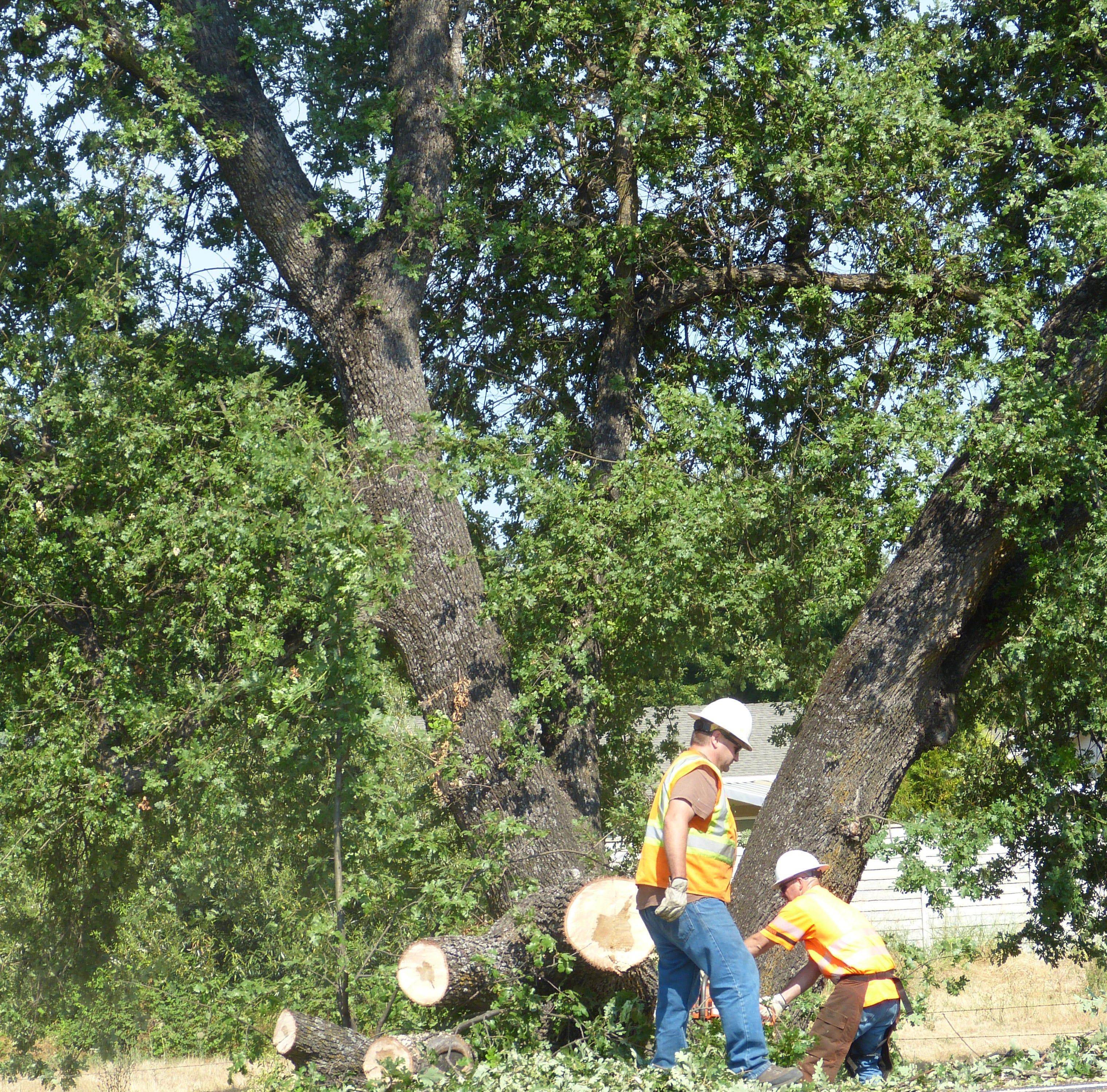 UPDATE: Lanes open after oak tree falls on I-5