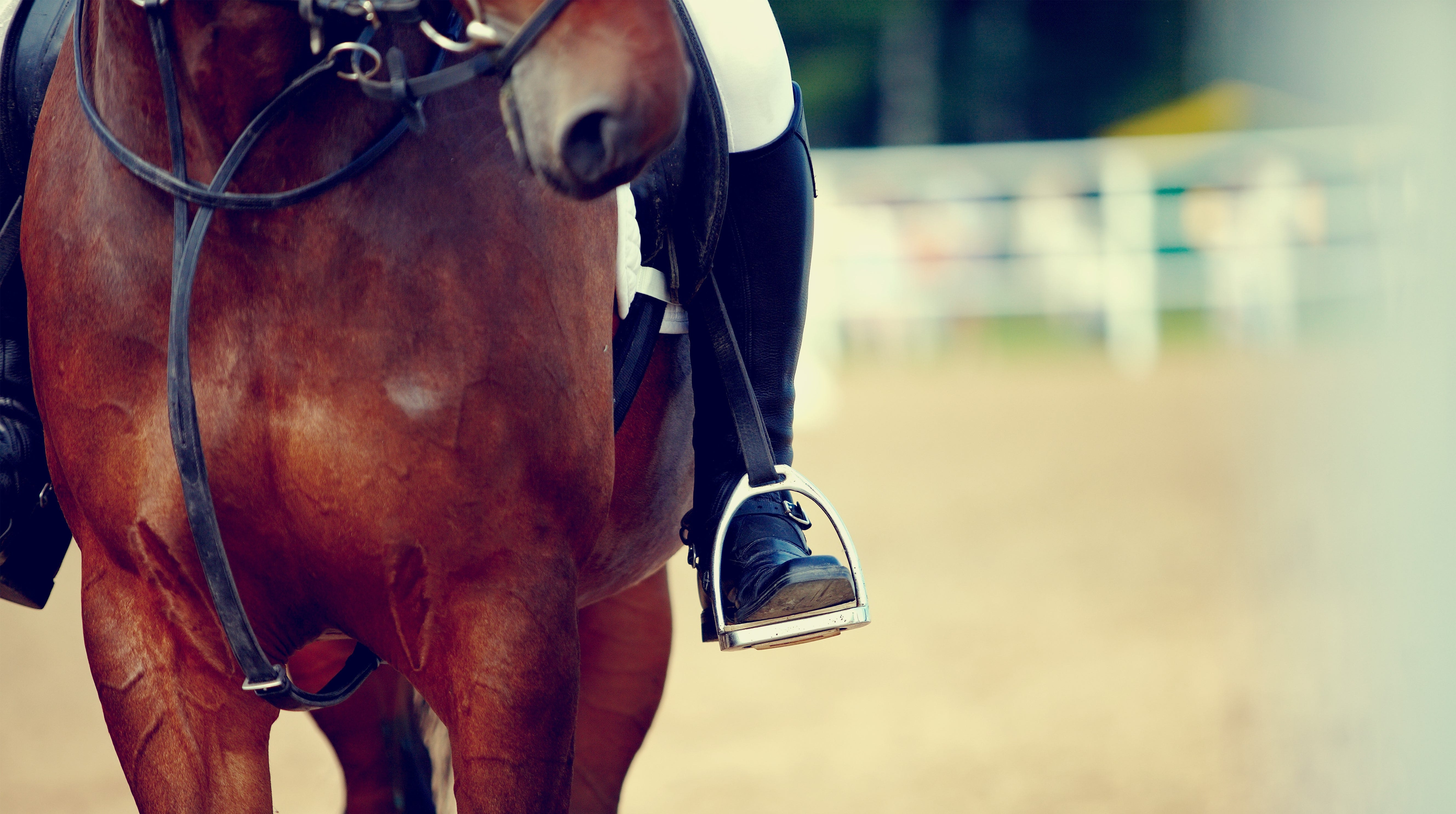 Twenty 4-H horse club members will represent Cumberland County at the state 4-H horse show.