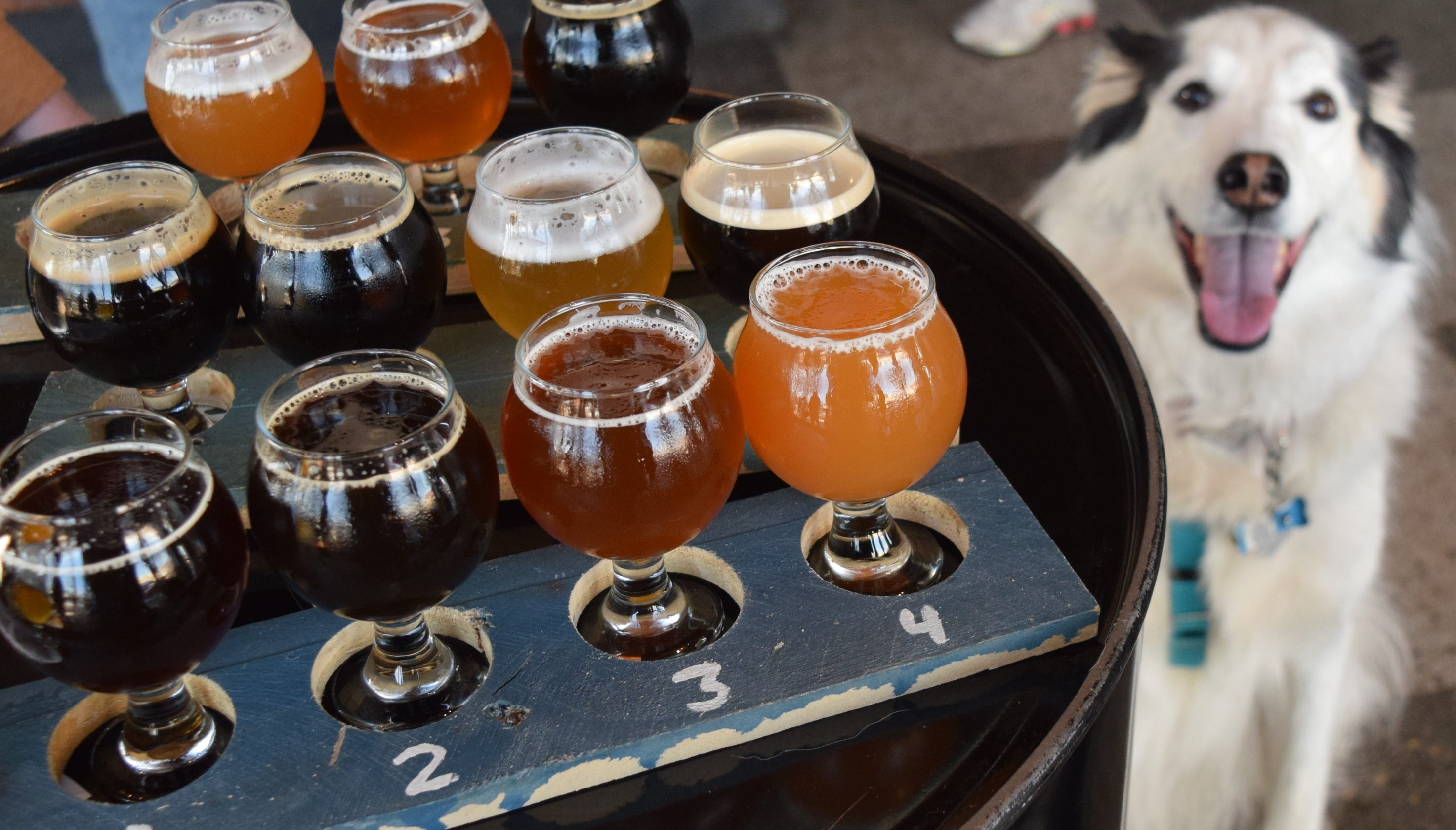 Dog-friendly craft breweries let you bring Fido on your tasting tour