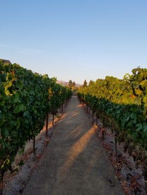 Trip A Run Through The Vineyards At Vintners Inn