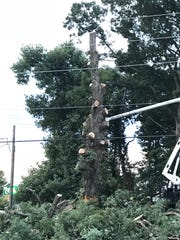 The oak tree at the corner of Mills Gap and Sweeten Creek roads is removed on Aug. 13, 2018.