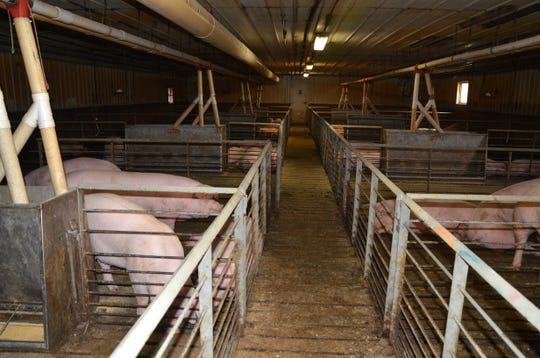 Barton Farm Co. has about 50,000 pigs at different locations. At its Homer headquarters, it has about 4,000 pigs.