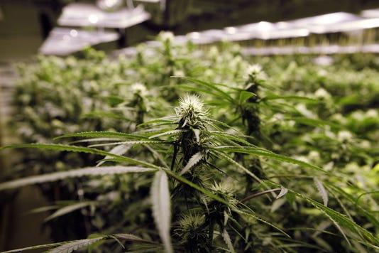 Legal marijuana in Michigan