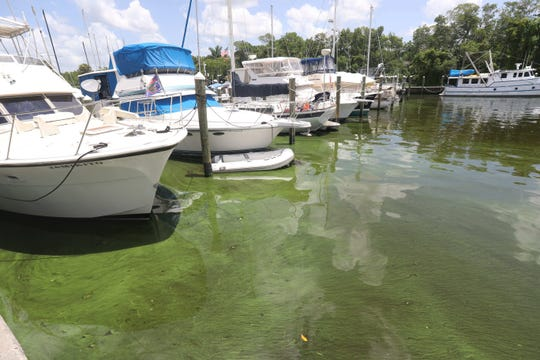 Southwest Florida is seeing a blue-green algae on the Caloosahatchee River and a red tide outbreak off the coast in the Gulf of Mexico.