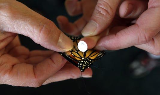 Monarch File Photo