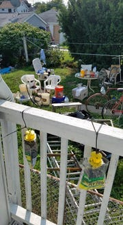 Traps can be seen hanging full on the deck of Dustin Jablonski in Cudahy. His neighbor has been storing meat and other food outside along with various items which has attracted flies and rodents to the neighborhood.