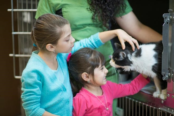 Adopting from a shelter can give a surrendered pet the second chance they deserve.