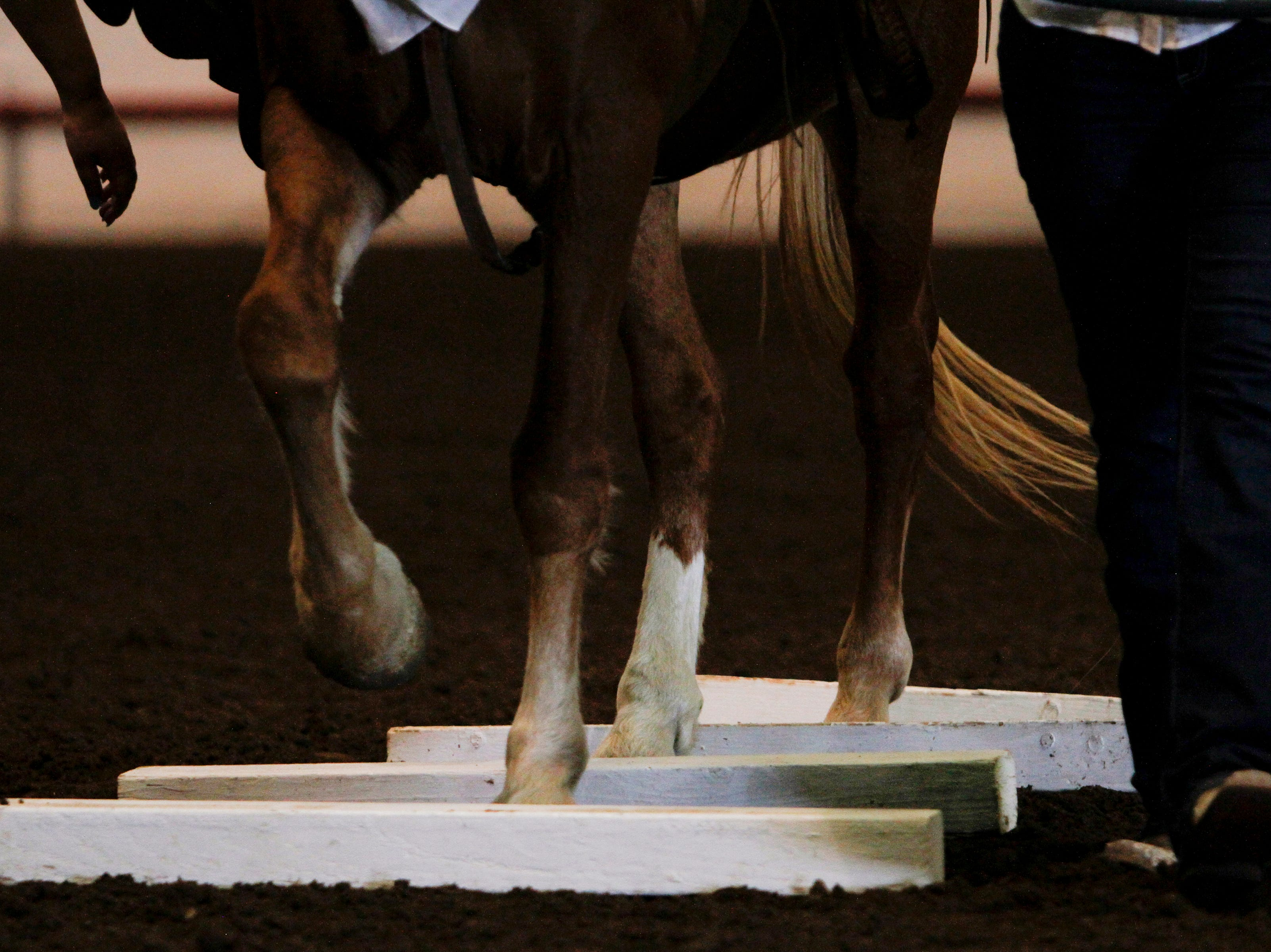 Savvy navigates through an obstacle, Wednesday, Aug. 15. 2018 during the Main Event an equestrian show for people with special needs at the San Juan County Fair in Memorial Coliseum at McGee Park in Farmington