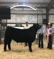 Market Steer Reserve Champion, 1st Place, Class 2 Division Shown By Koelle Brandenberger. This Grand Champion sold for $10,000 at the auction on Friday night at the 2018 Lincoln County Fair.