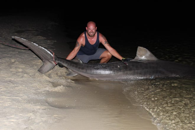David Smith poses with a tiger shark on Friday in Pensacola Bay at Fort Pickens.