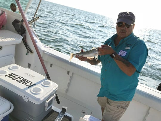 Mike Cottrell, of Kingpin Charters, prepares to measure a walleye caught in Lake Erie during the Governor's Fish Ohio Day.