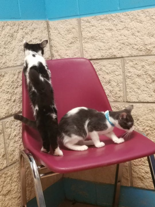 Weston (left) and Regis (right) investigate the space at the San Angelo city shelter.
