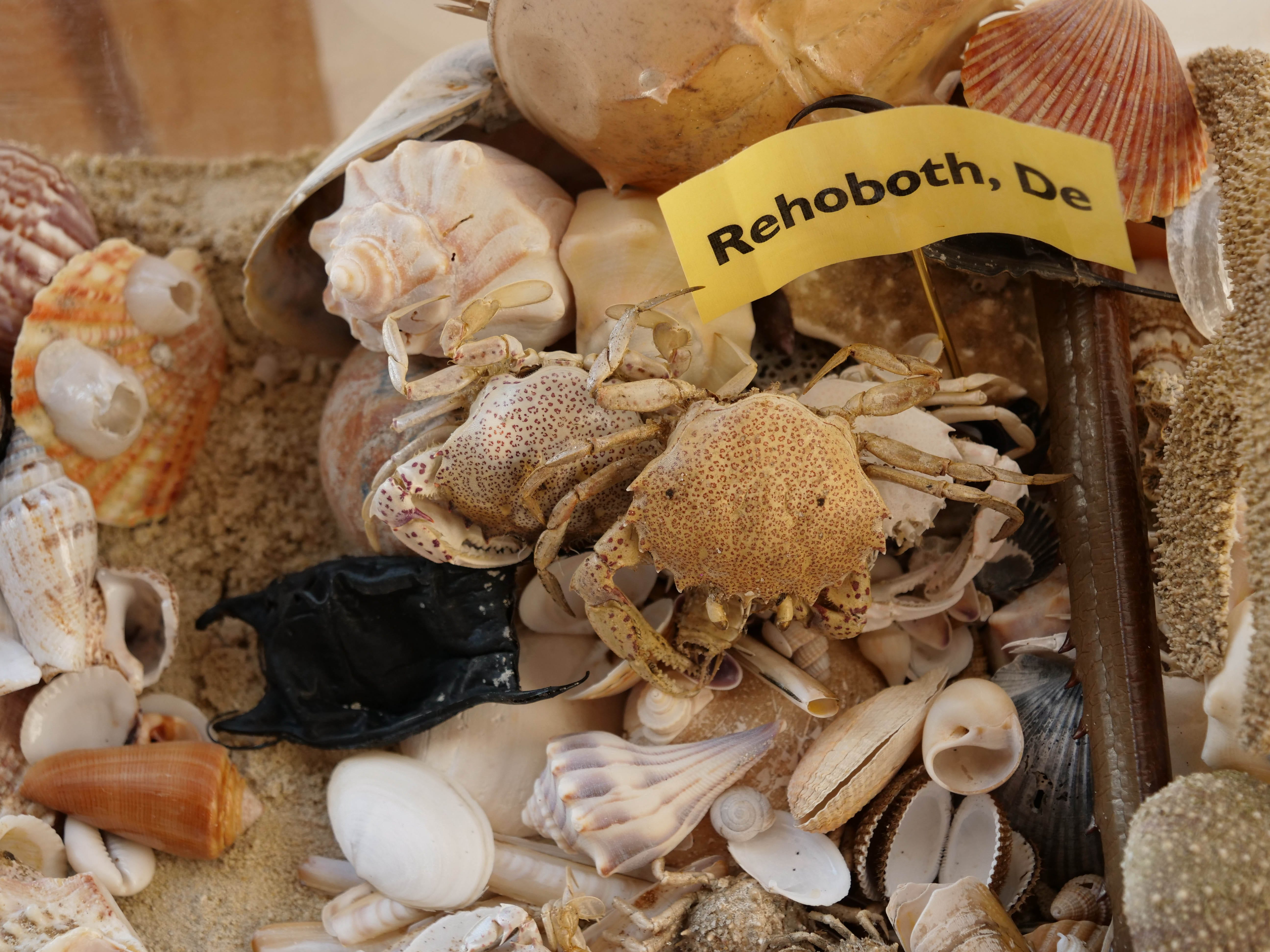 Larry Mann wouldn't have a collection without ocean relics from Rehoboth Beach, where he's had a home for over 30 years.