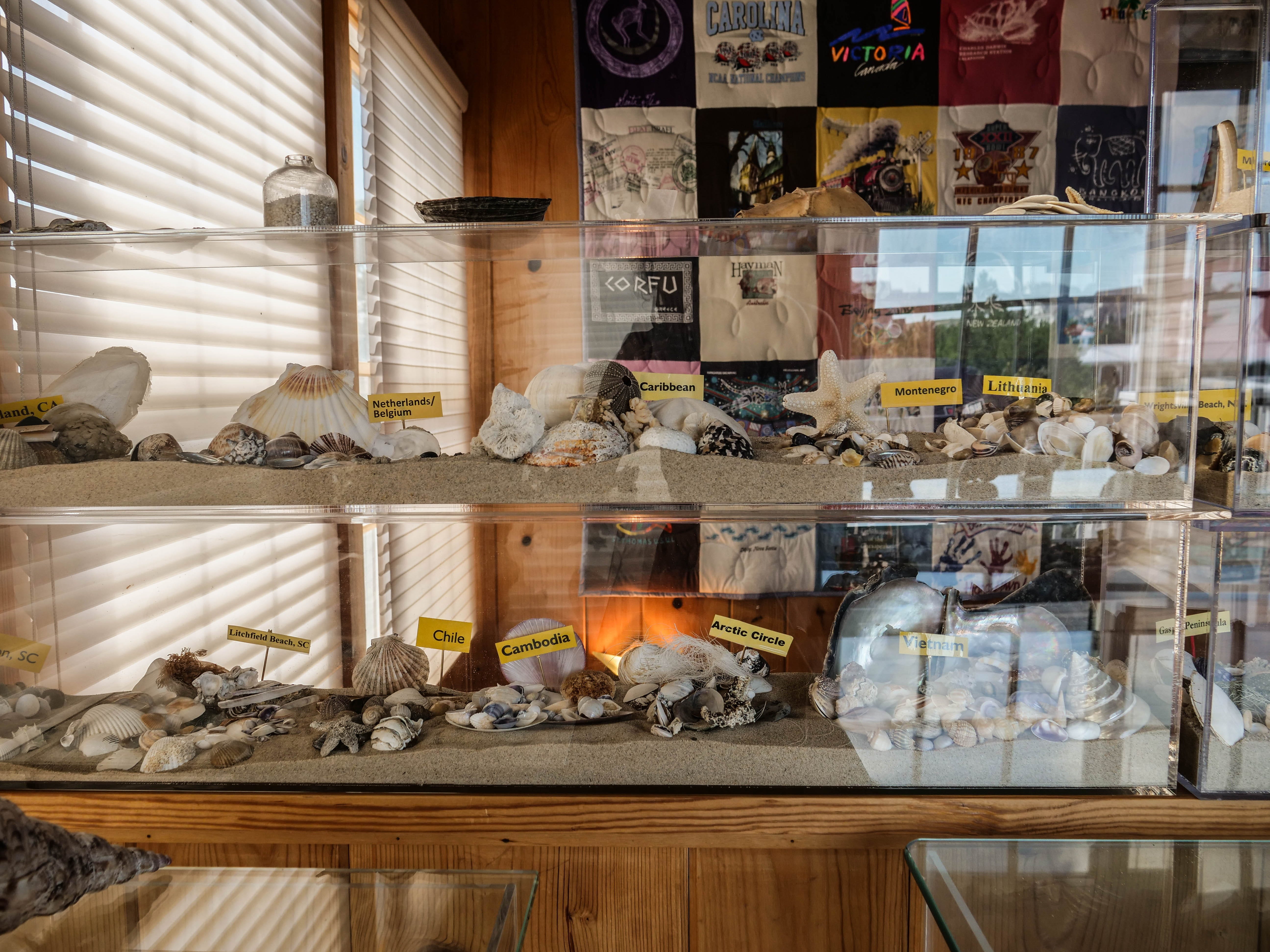 After traveling to all seven continents, Larry Mann said seashells, regardless of where he's found them, have lots of similarities.