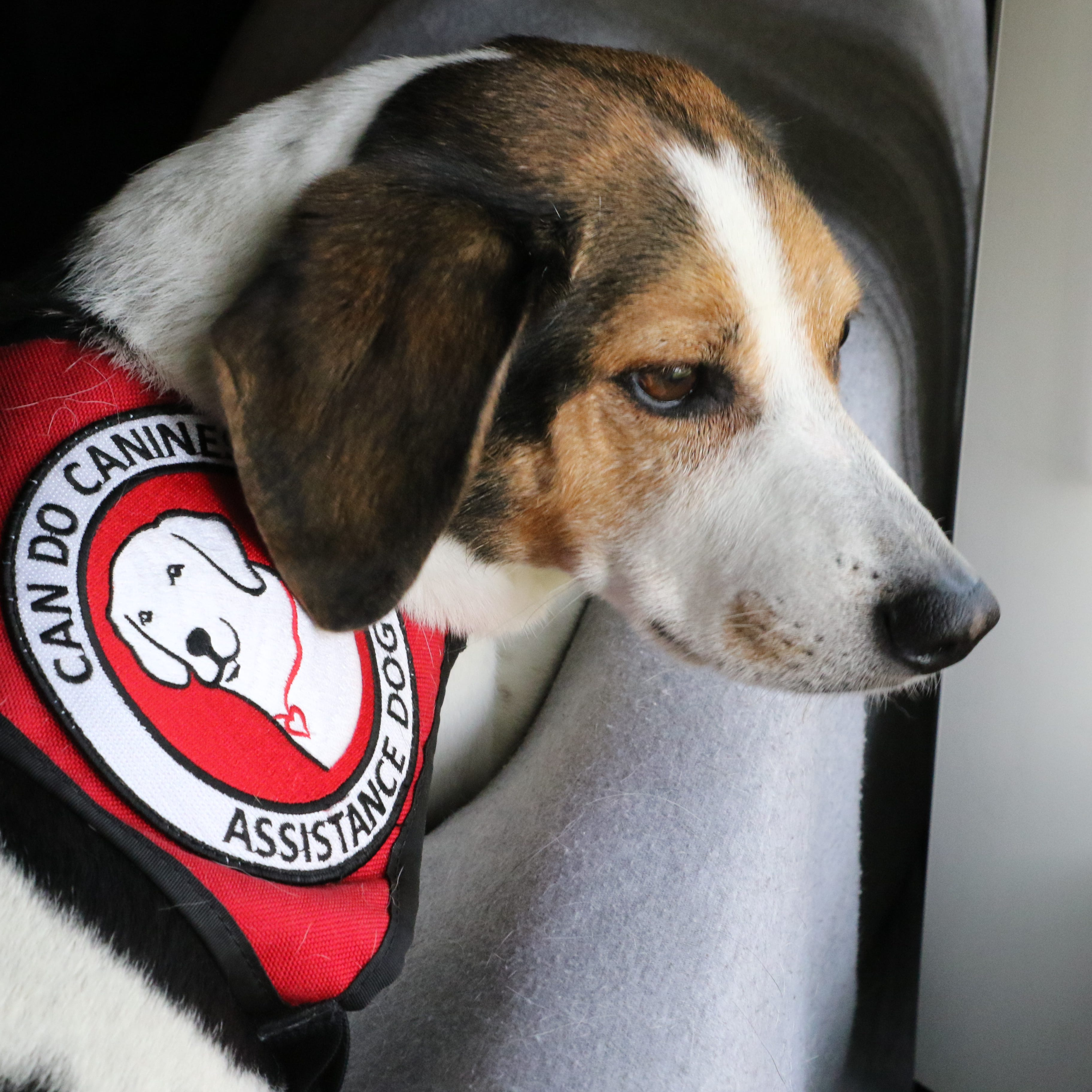 What does the new law on helper dogs mean for you?