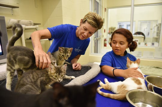 """Necy Foster (left) and her daughter Vanessa, 15, of Vero Beach, check in on several kittens at the Humane Society of Vero Beach and Indian River County on Wednesday, August 15, 2018, that have recently been raised through a foster care program and are ready for adoption. Necy Foster and several of her children are among a group of volunteers that help raise the kittens from infancy until they are big enough to be adopted out. """"We've been doing it for over a year now, we fostered over 20 kittens and they have all gotten good homes and we love it,"""" Necy Foster said."""