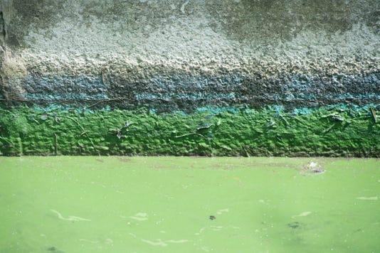 Tcn 0815 Irl Algae 5
