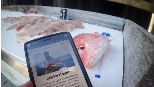 Fishery managers request anglers to use the mobile and electronic MyFishCount app to record red snapper catches for data.