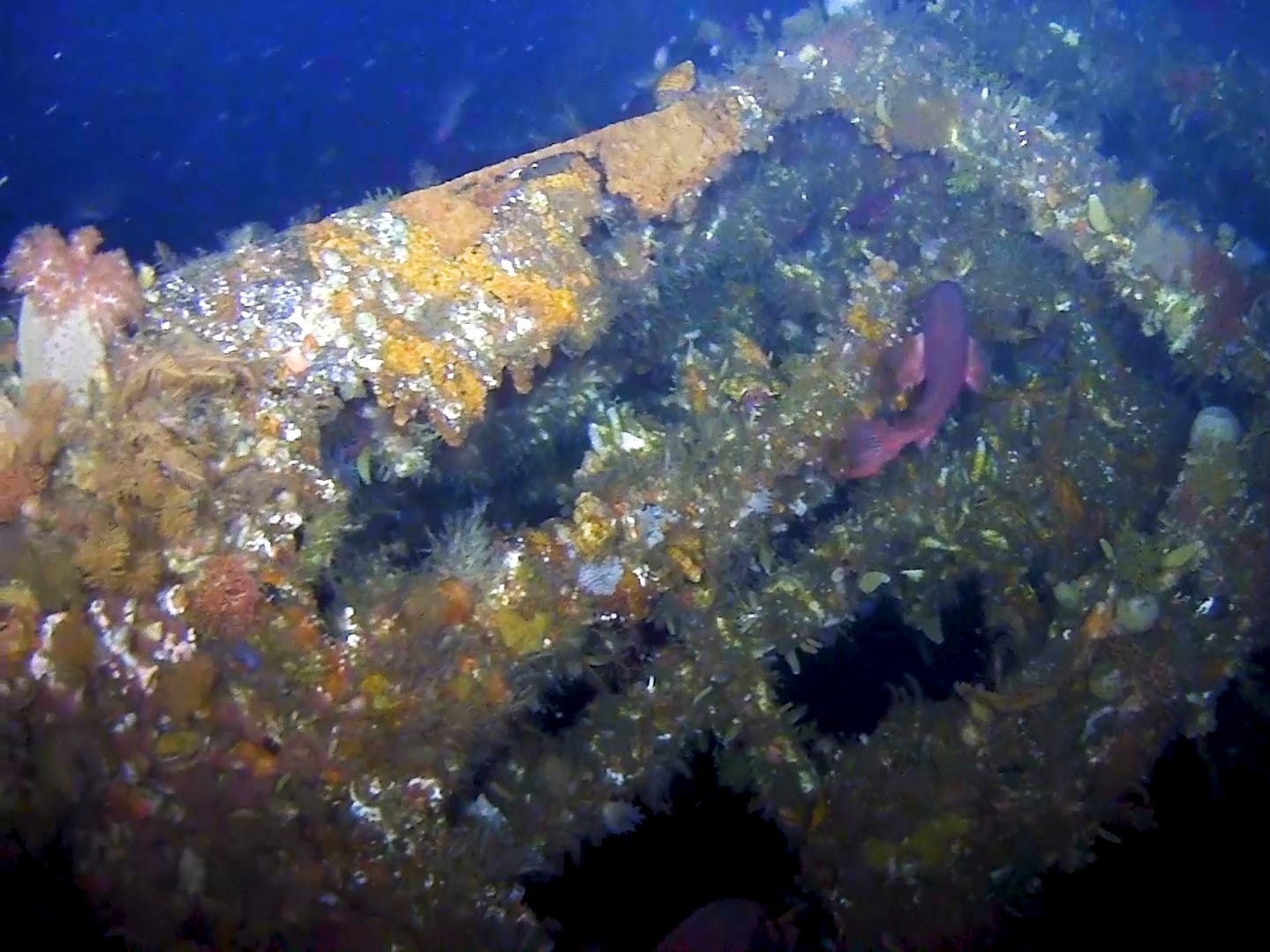 This summer, scientists from the University of Delaware and other organizations helped find the final resting ground of the stern of the WWII destroyer USS Abner Read, which has been resting at the bottom of the Bering Sea for 75 years.