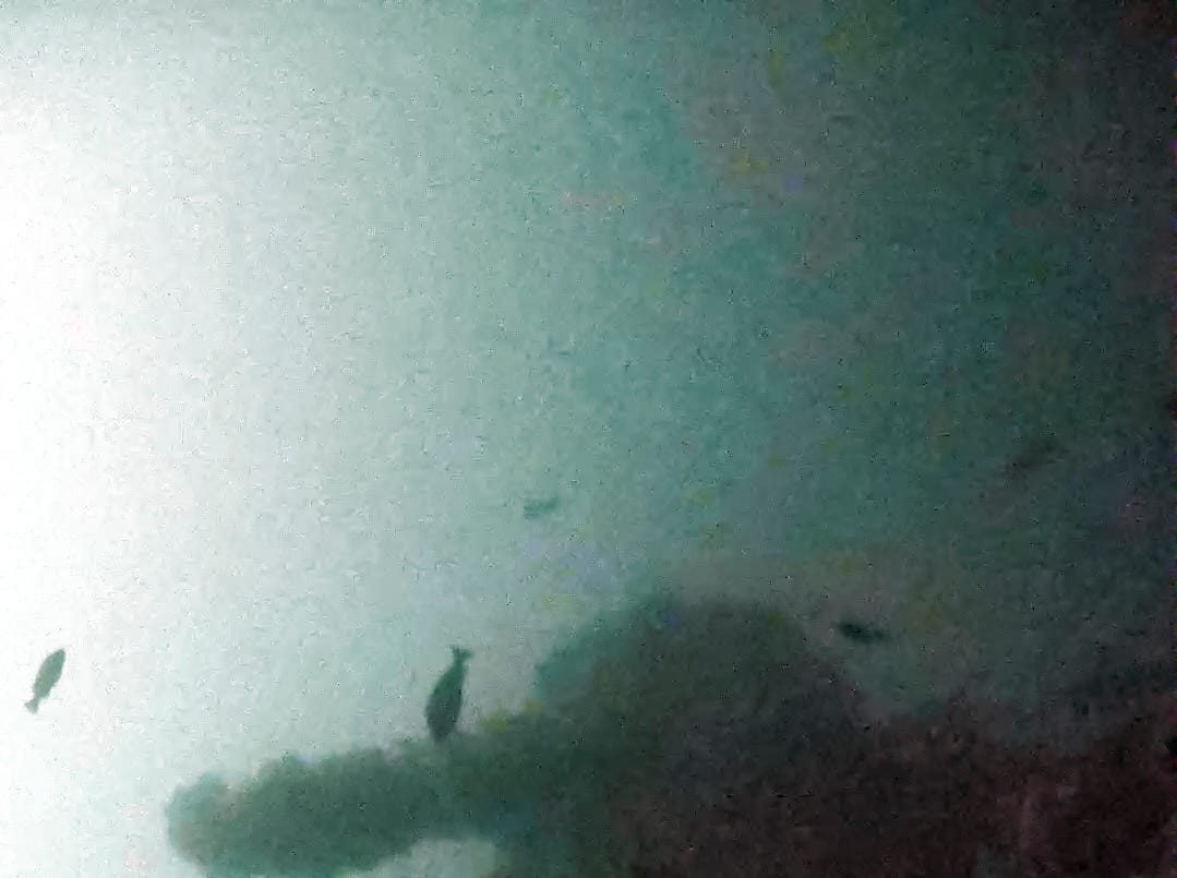 An underwater robot captured these images of the lost WWII destroyer USS Abner Read's stern at the bottom of the Bering Sea.