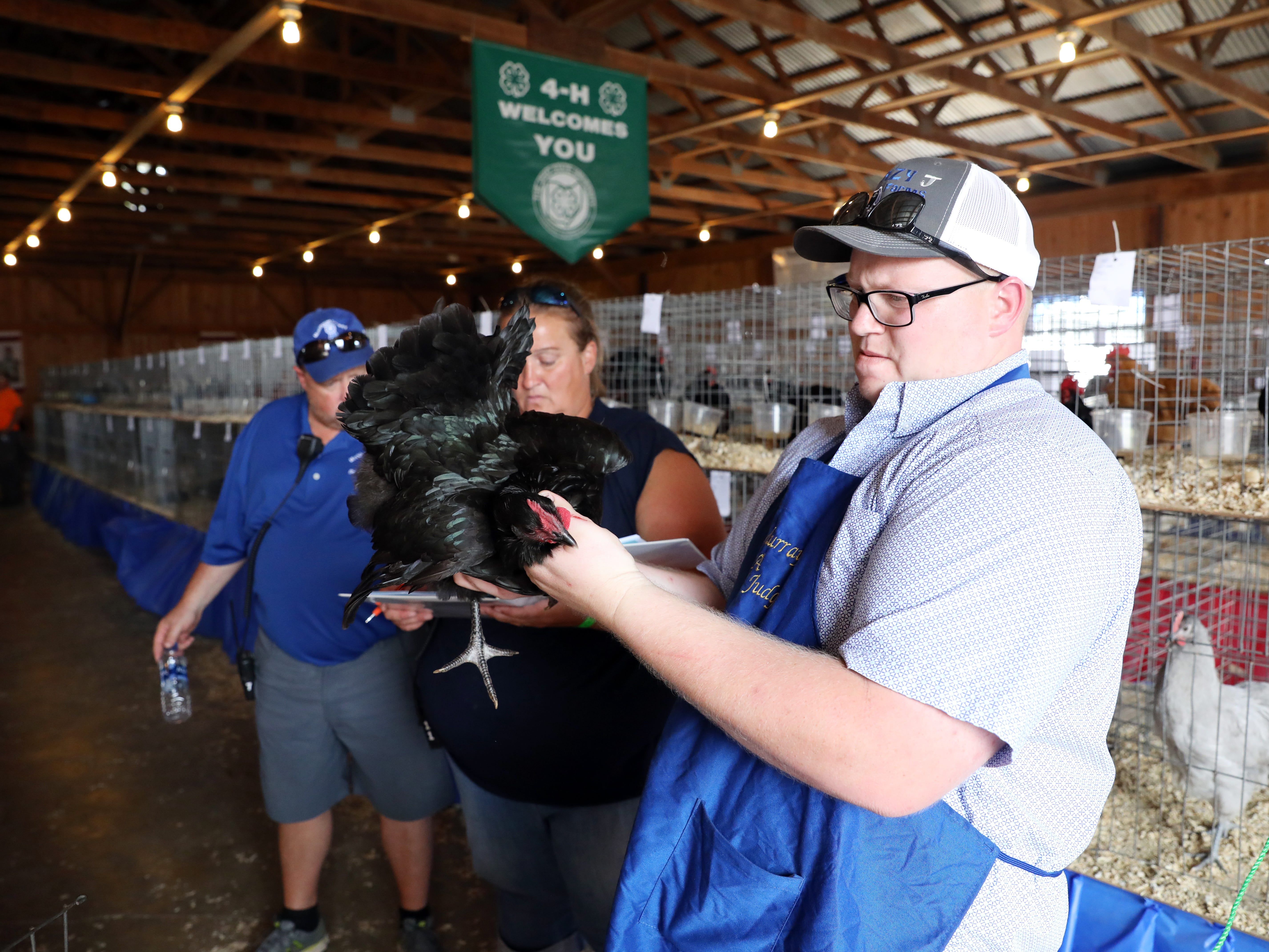 Poultry judging took place on Wednesday at the Muskingum County Blue Ribbon Fair.